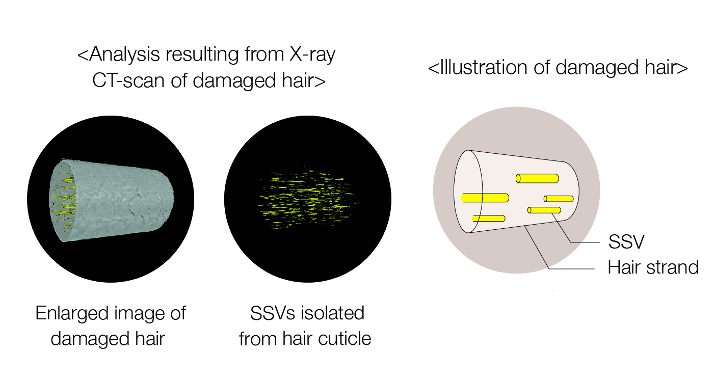 ssv-research-graphic